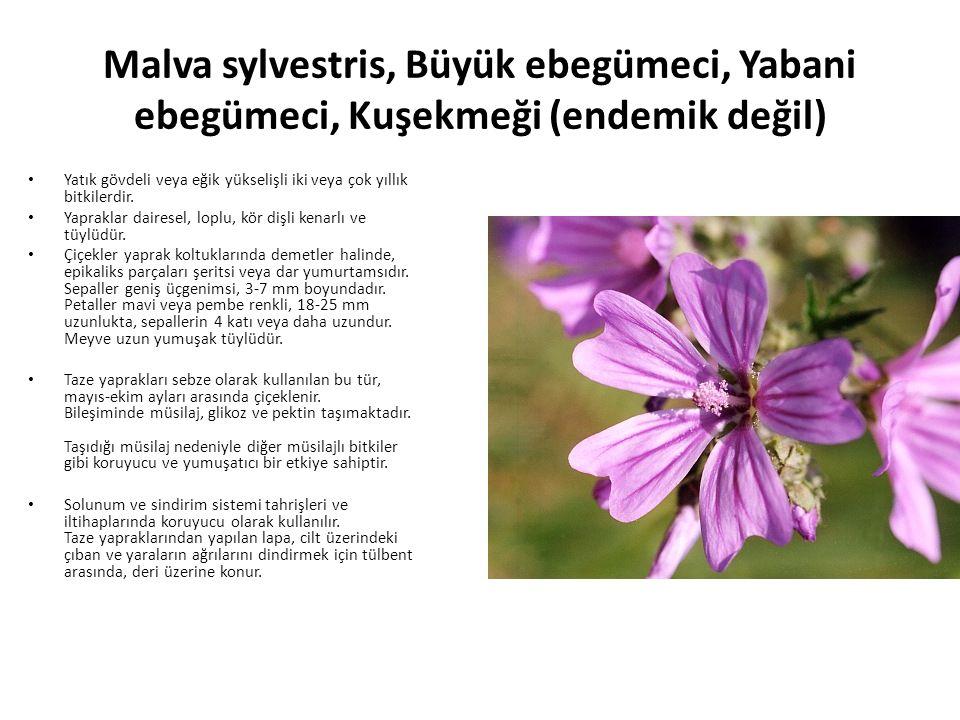 Malva sylvestris, Büyük ebegümeci, Yabani ebegümeci, Kuşekmeği (endemik değil) Yatık gövdeli veya eğik yükselişli iki veya çok yıllık bitkilerdir.