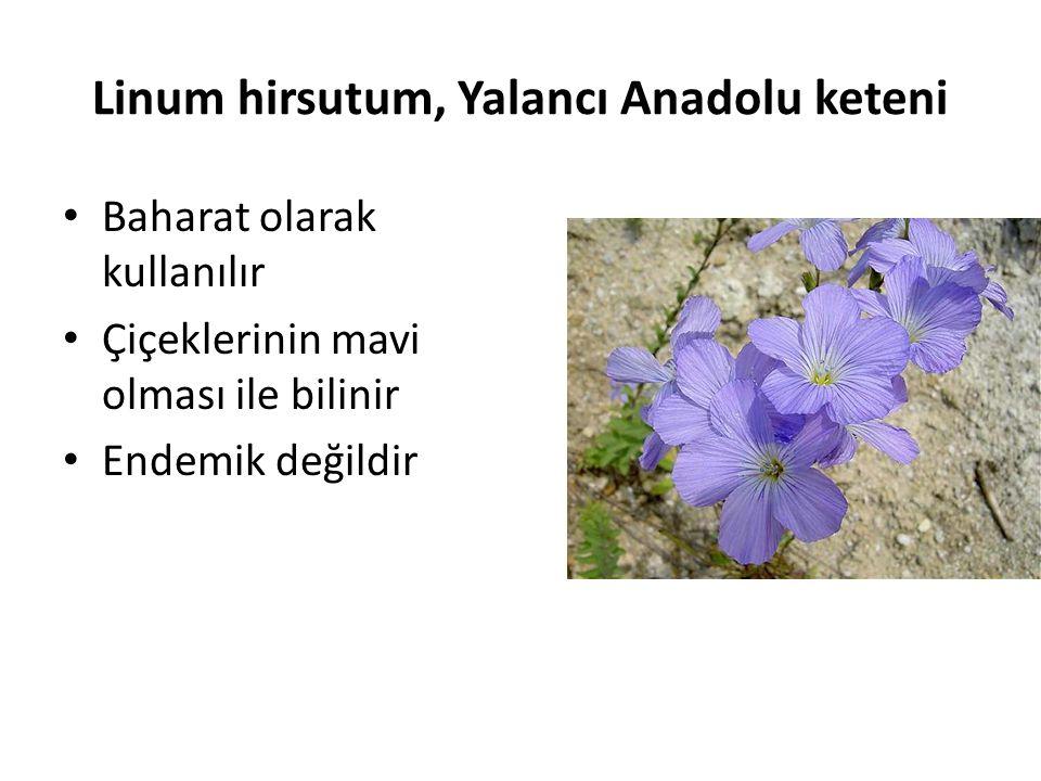 Linum hirsutum, Yalancı Anadolu keteni Baharat olarak kullanılır Çiçeklerinin mavi olması ile bilinir Endemik değildir