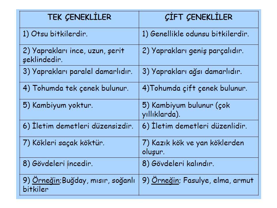 Marmara Bölgesi Endemikleri