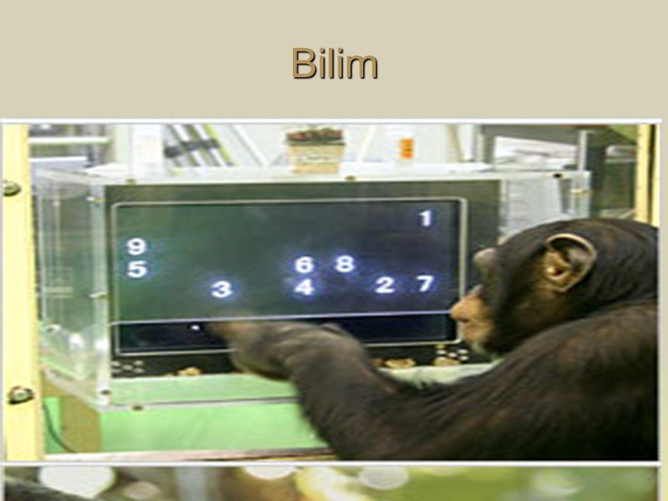  16/05/2004 Tarihli Deneysel ve Diğer Bilimsel Amaçlar İçin Kullanılan Deney Hayvanlarının Korunması, Deney Hayvanlarının Üretim Yerleri ile Deney Yapacak Olan Laboratuvarların Kuruluş, Çalışma, Denetleme, Usul ve Esaslarına Dair Yönetmelik  Hayvan Hakları Evrensel Bildirgesi (UNESCO, Paris)