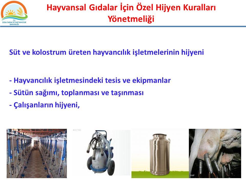 Süt ve kolostrum üreten hayvancılık işletmelerinin hijyeni - Hayvancılık işletmesindeki tesis ve ekipmanlar - Sütün sağımı, toplanması ve taşınması -