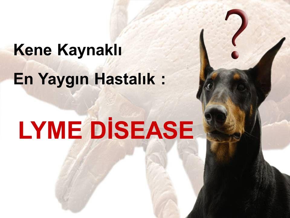 Lyme Disease, Borrelia türü bakteriler tarafından oluşturulan, ülkemizde yaygın olarak görülen Ixodes cinsi kenelerin bulaştırdığı, insanlarda da hastalık yapan zoonoz bir enfeksiyondur.