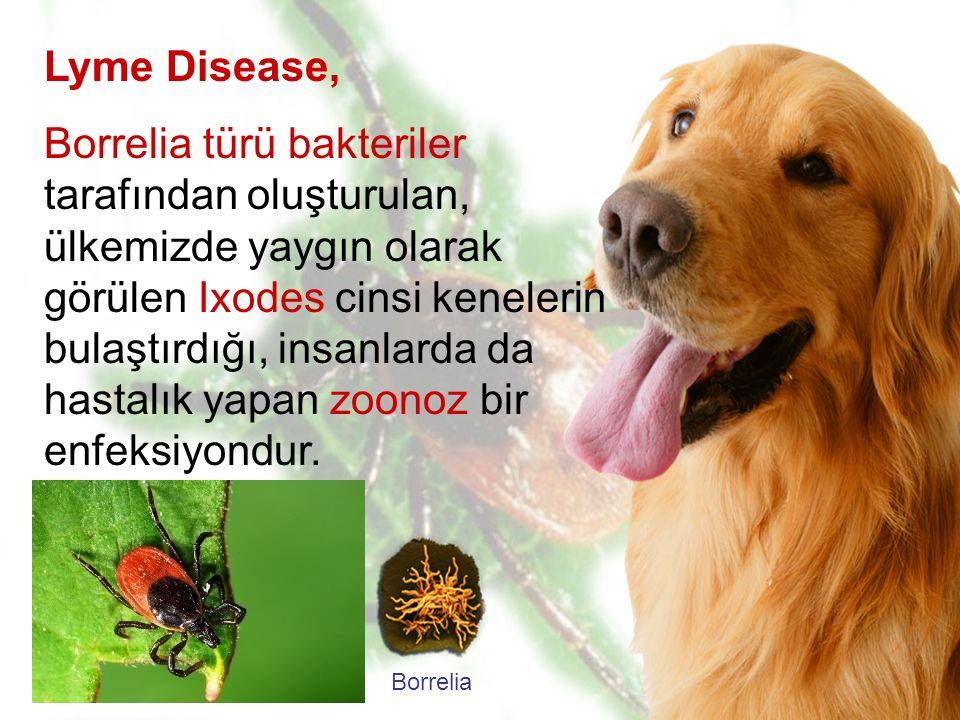 Borrelia etkenleri; kenelerin çeşitli hayvanlardan (köpek, geyik, kemirgenler vb.) kan emmesi vasıtasıyla keneye bulaşırlar.