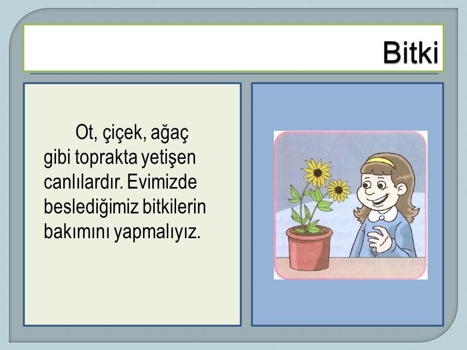 Ot, çiçek, ağaç gibi toprakta yetişen canlılardır. Evimizde beslediğimiz bitkilerin bakımını yapmalıyız.