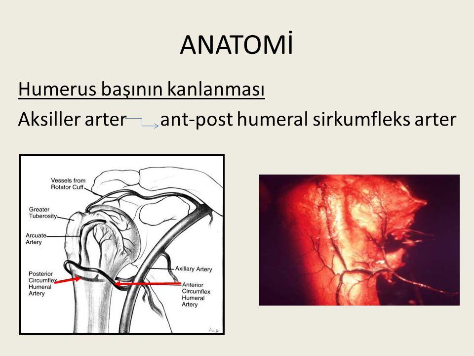 Humerus başının kanlanması Aksiller arter ant-post humeral sirkumfleks arter