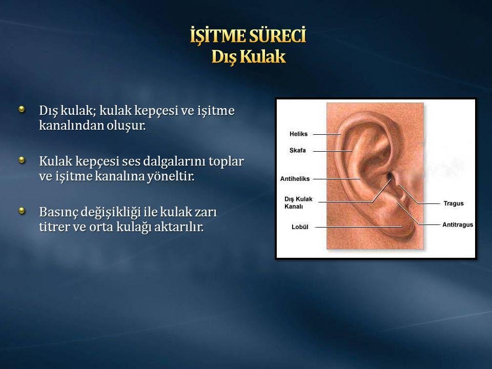 Dış kulak; kulak kepçesi ve işitme kanalından oluşur. Kulak kepçesi ses dalgalarını toplar ve işitme kanalına yöneltir. Basınç değişikliği ile kulak z