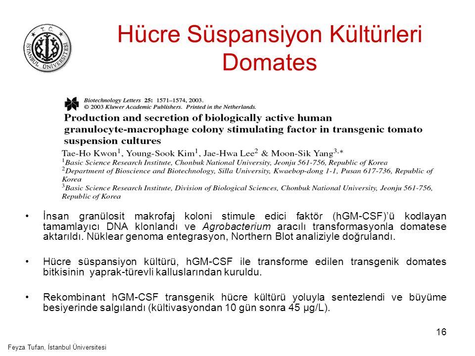 17 Hücre Süspansiyon Kültürleri Soya Soya süspansiyon hücre kültürleri, hepatit B yüzey antijeni (HBsAg) ekspresyonu için, A.