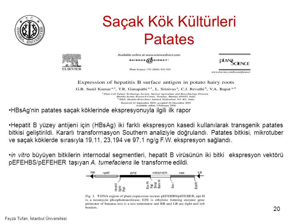 21 Saçak Kök Kültürleri Patates Feyza Tufan, İstanbul Üniversitesi Transgenik patates bitkisinin inter-nodal segmentlerinden saçak kök indüksiyonu