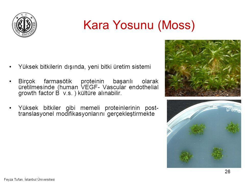 27 Kara Yosunu Feyza Tufan, İstanbul Üniversitesi Yüksek derecede glikozillenmiş peptid hormonu eritropoietin (EPO) eritrosit olgunlaştırılmasının düzenlenmesinde ana rol oynamaktadır.