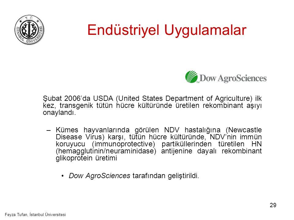 30 Endüstriyel Uygulamalar Transgenik tütün, patates veya domates hücre kültürlerinde, immunojenik proteinlerin üretiminde diğer başarılı örnekler: –Avian influenza virus (AIV)'ünün HA antijeni (hemagglutinin protein) –Infectious Bursal Diseases virus (IBDV)'ünün VP2 yapısal proteini Feyza Tufan, İstanbul Üniversitesi