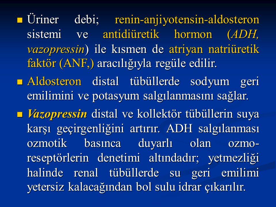 Üriner debi; renin-anjiyotensin-aldosteron sistemi ve antidiüretik hormon (ADH, vazopressin) ile kısmen de atriyan natriüretik faktör (ANF,) aracılığı
