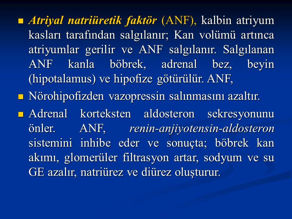 Atriyal natriüretik faktör (ANF), kalbin atriyum kasları tarafından salgılanır; Kan volümü artınca atriyumlar gerilir ve ANF salgılanır. Salgılanan AN
