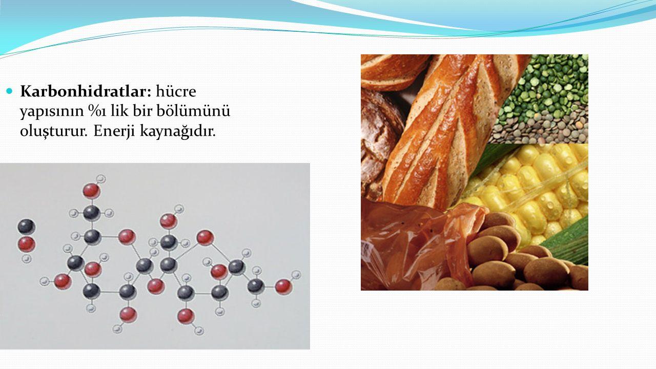 Karbonhidratlar: hücre yapısının %1 lik bir bölümünü oluşturur. Enerji kaynağıdır.