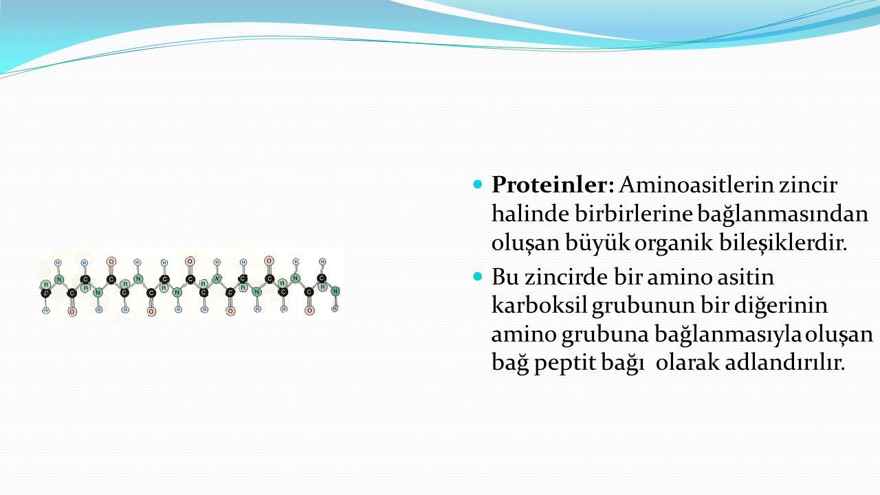 Proteinler: Aminoasitlerin zincir halinde birbirlerine bağlanmasından oluşan büyük organik bileşiklerdir. Bu zincirde bir amino asitin karboksil grubu