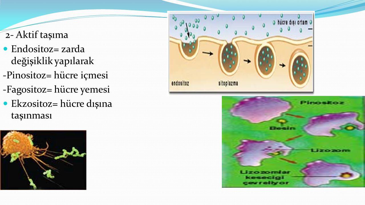2- Aktif taşıma Endositoz= zarda değişiklik yapılarak -Pinositoz= hücre içmesi -Fagositoz= hücre yemesi Ekzositoz= hücre dışına taşınması