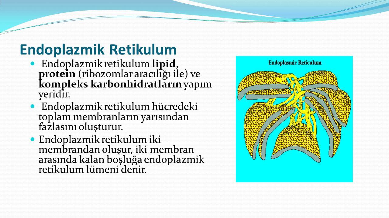 Endoplazmik Retikulum Endoplazmik retikulum lipid, protein (ribozomlar aracılığı ile) ve kompleks karbonhidratların yapım yeridir. Endoplazmik retikul