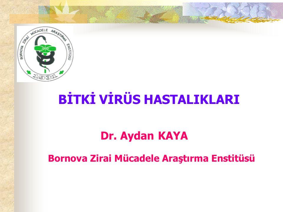 BİTKİ VİRÜS HASTALIKLARI Dr. Aydan KAYA Bornova Zirai Mücadele Araştırma Enstitüsü