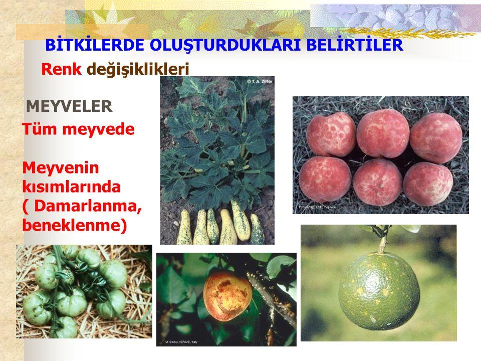 Renk değişiklikleri MEYVELER Tüm meyvede Meyvenin kısımlarında ( Damarlanma, beneklenme) BİTKİLERDE OLUŞTURDUKLARI BELİRTİLER