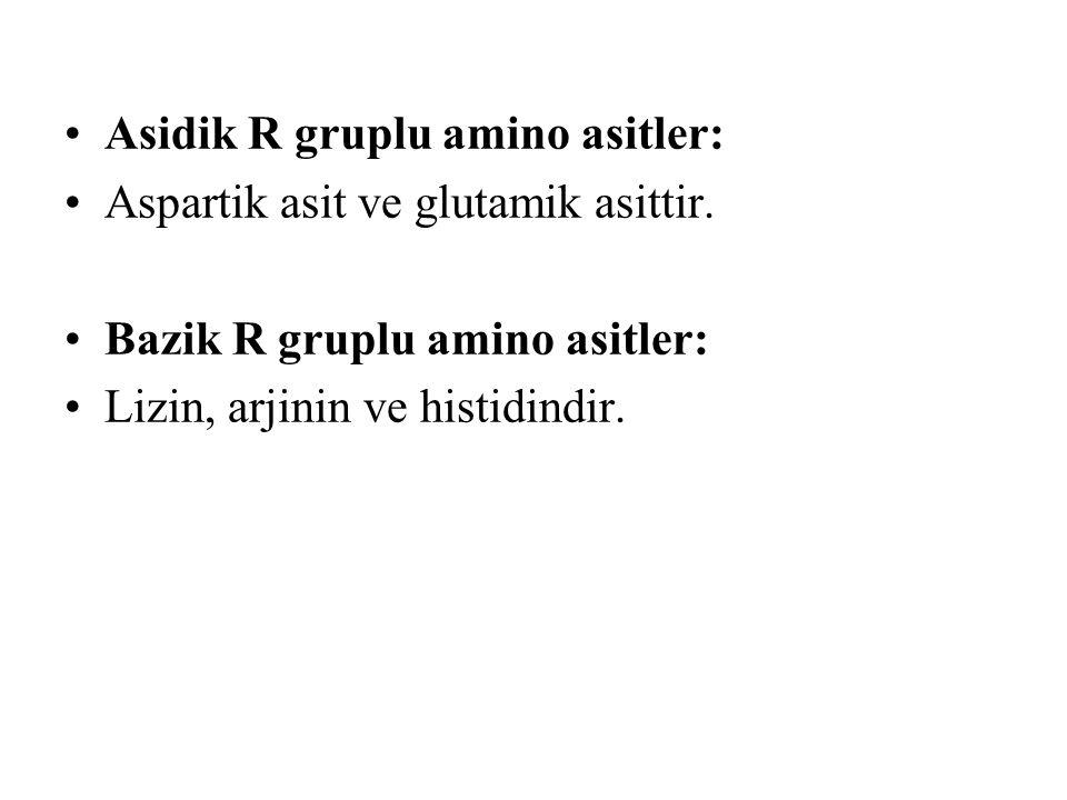Asidik R gruplu amino asitler: Aspartik asit ve glutamik asittir. Bazik R gruplu amino asitler: Lizin, arjinin ve histidindir.