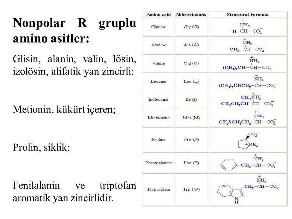 Nonpolar R gruplu amino asitler: Glisin, alanin, valin, lösin, izolösin, alifatik yan zincirli; Metionin, kükürt içeren; Prolin, siklik; Fenilalanin ve triptofan aromatik yan zincirlidir.