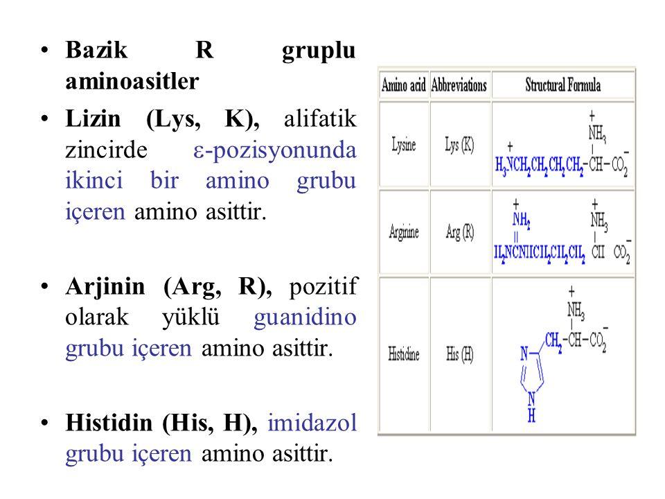 Bazik R gruplu aminoasitler Lizin (Lys, K), alifatik zincirde  -pozisyonunda ikinci bir amino grubu içeren amino asittir. Arjinin (Arg, R), pozitif o