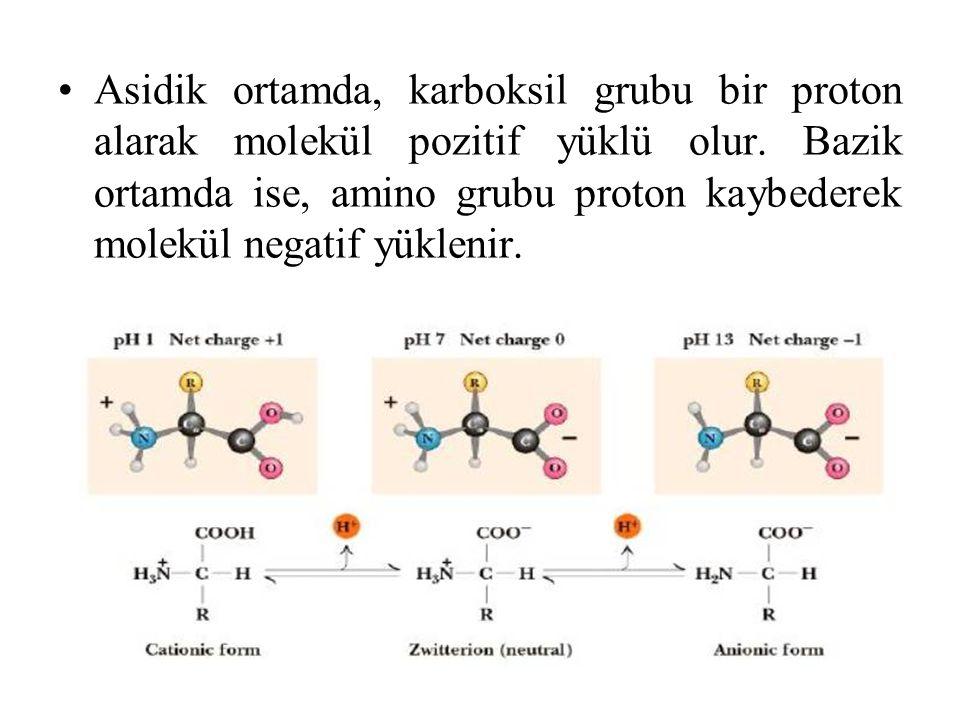 Asidik ortamda, karboksil grubu bir proton alarak molekül pozitif yüklü olur. Bazik ortamda ise, amino grubu proton kaybederek molekül negatif yükleni