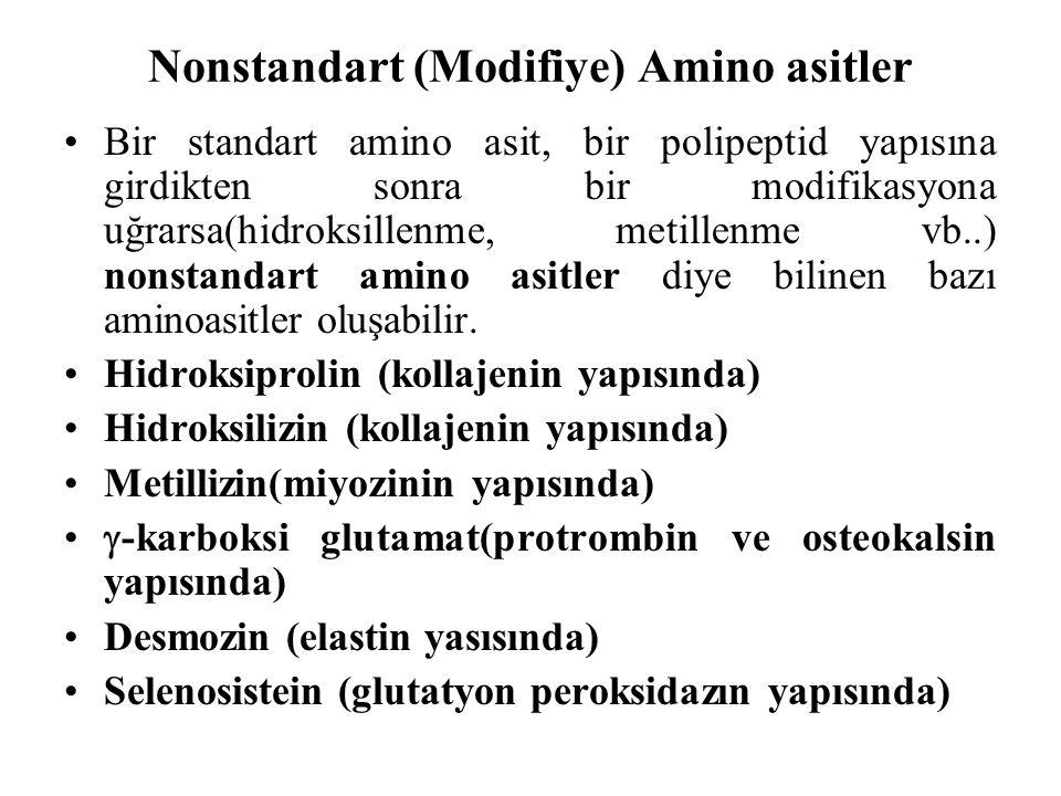 Nonstandart (Modifiye) Amino asitler Bir standart amino asit, bir polipeptid yapısına girdikten sonra bir modifikasyona uğrarsa(hidroksillenme, metillenme vb..) nonstandart amino asitler diye bilinen bazı aminoasitler oluşabilir.