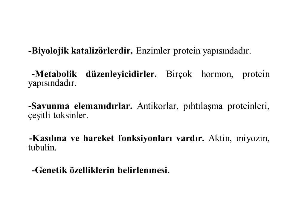 -Biyolojik katalizörlerdir. Enzimler protein yapısındadır.