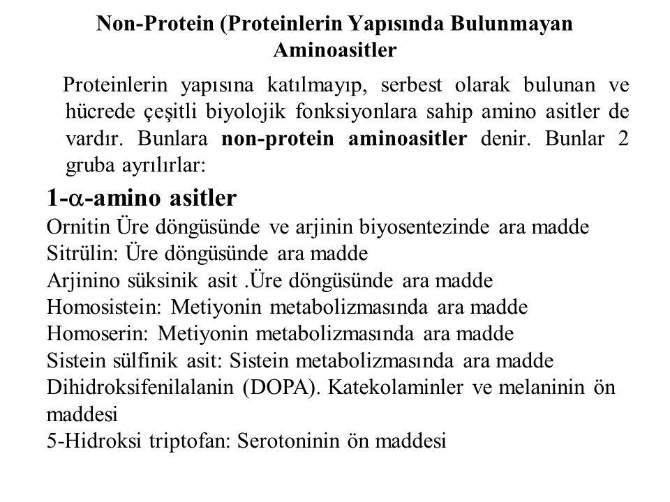 Non-Protein (Proteinlerin Yapısında Bulunmayan Aminoasitler Proteinlerin yapısına katılmayıp, serbest olarak bulunan ve hücrede çeşitli biyolojik fonk
