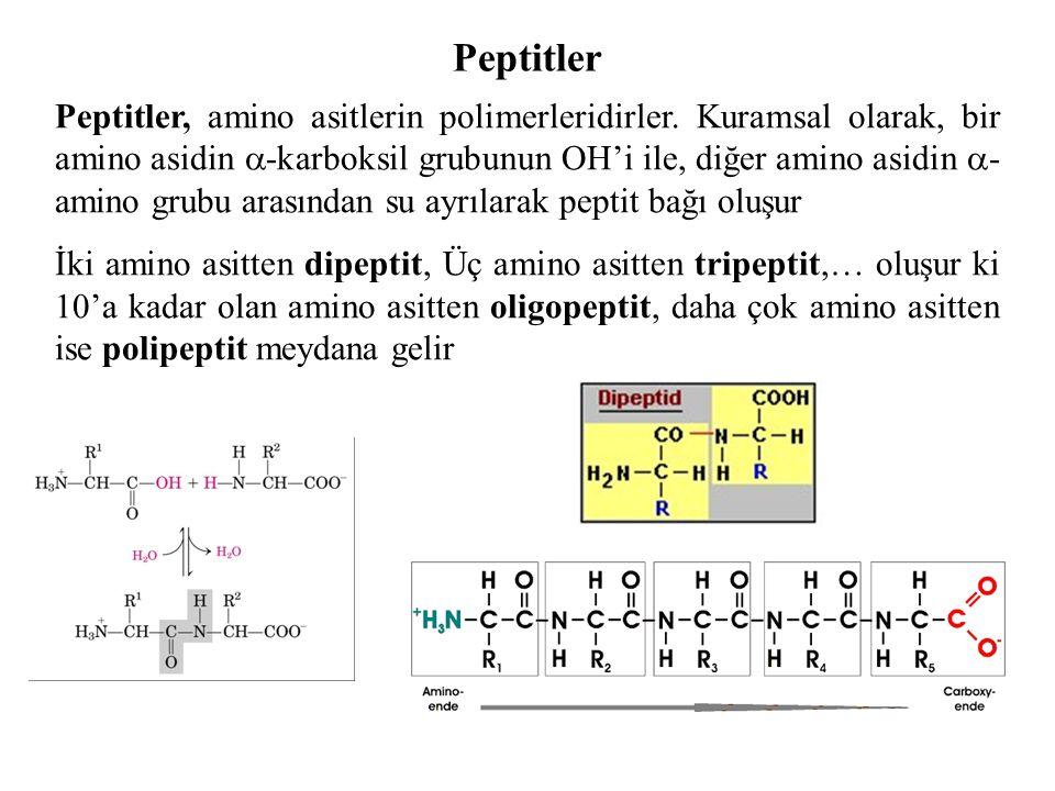 Peptitler Peptitler, amino asitlerin polimerleridirler. Kuramsal olarak, bir amino asidin  -karboksil grubunun OH'i ile, diğer amino asidin  - amino