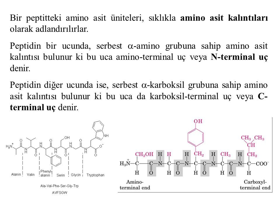 Bir peptitteki amino asit üniteleri, sıklıkla amino asit kalıntıları olarak adlandırılırlar. Peptidin bir ucunda, serbest  -amino grubuna sahip amino