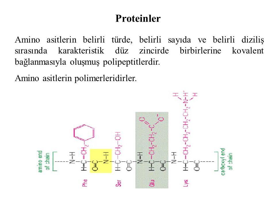 Proteinler Amino asitlerin belirli türde, belirli sayıda ve belirli diziliş sırasında karakteristik düz zincirde birbirlerine kovalent bağlanmasıyla oluşmuş polipeptitlerdir.