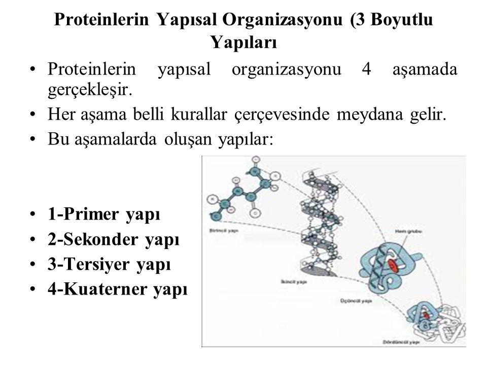 Proteinlerin Yapısal Organizasyonu (3 Boyutlu Yapıları Proteinlerin yapısal organizasyonu 4 aşamada gerçekleşir. Her aşama belli kurallar çerçevesinde