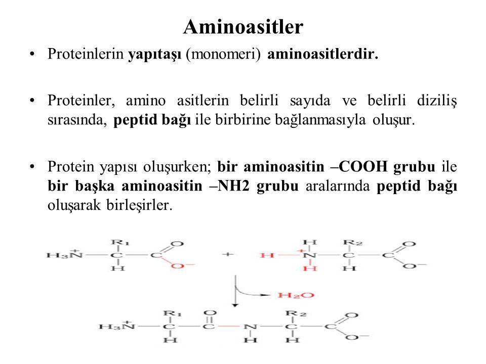 Proteinlerin yapıtaşı (monomeri) aminoasitlerdir. Proteinler, amino asitlerin belirli sayıda ve belirli diziliş sırasında, peptid bağı ile birbirine b