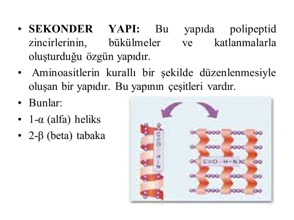 SEKONDER YAPI: Bu yapıda polipeptid zincirlerinin, bükülmeler ve katlanmalarla oluşturduğu özgün yapıdır.