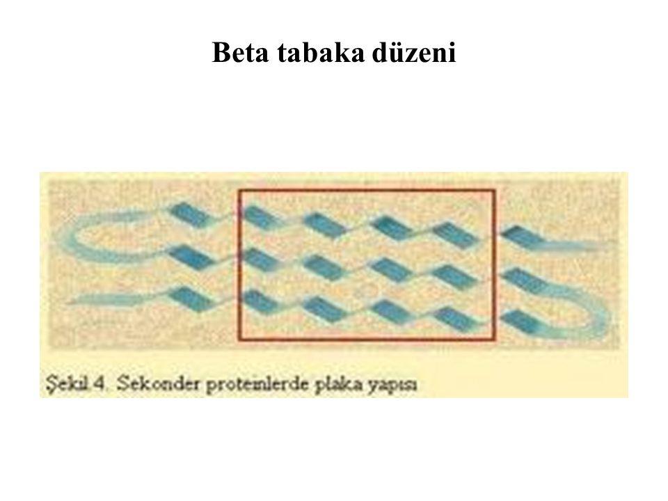 Beta tabaka düzeni