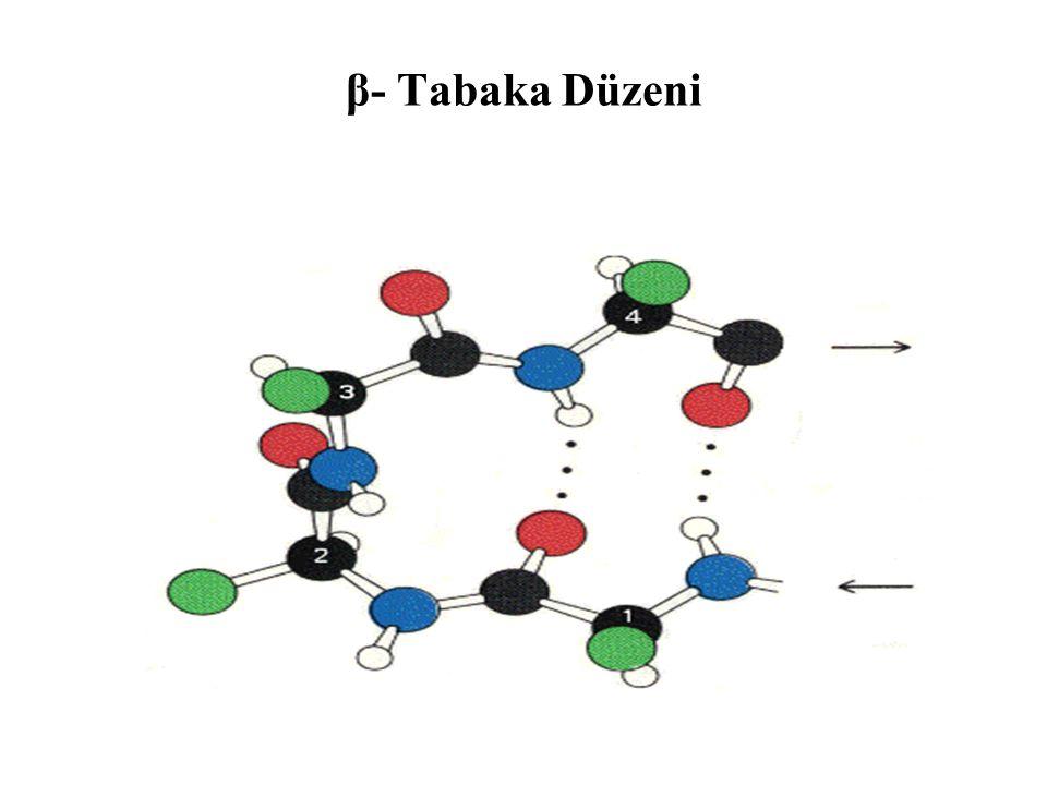 β- Tabaka Düzeni