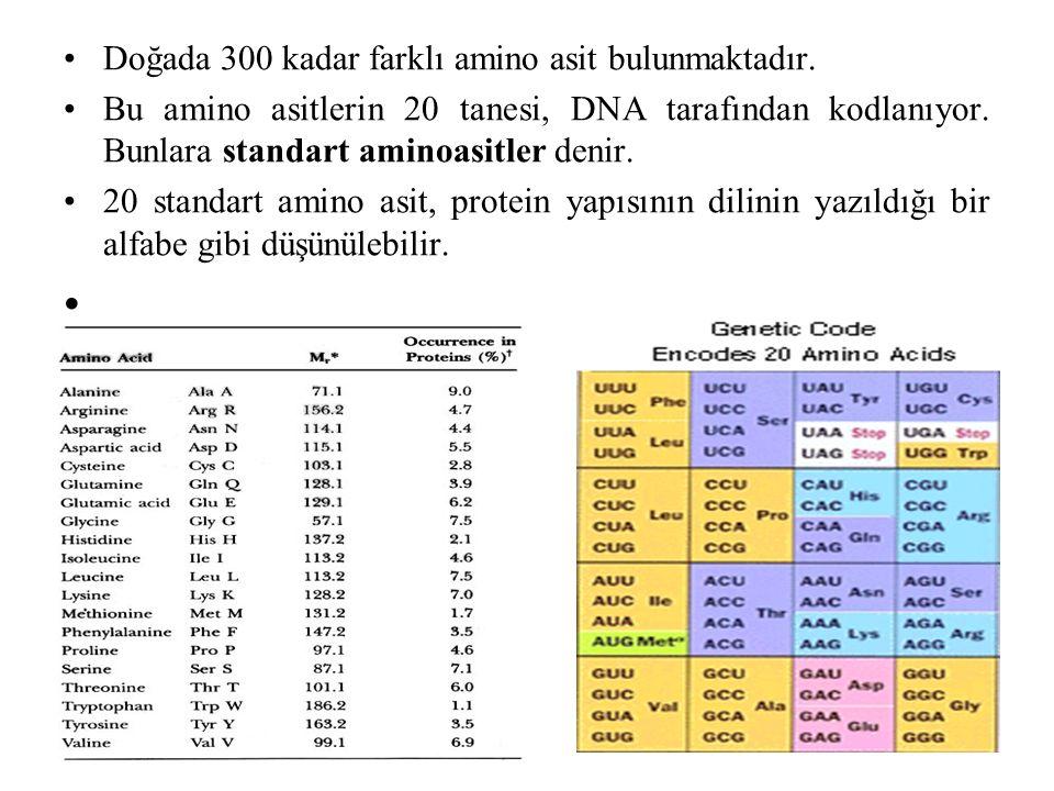 Doğada 300 kadar farklı amino asit bulunmaktadır. Bu amino asitlerin 20 tanesi, DNA tarafından kodlanıyor. Bunlara standart aminoasitler denir. 20 sta