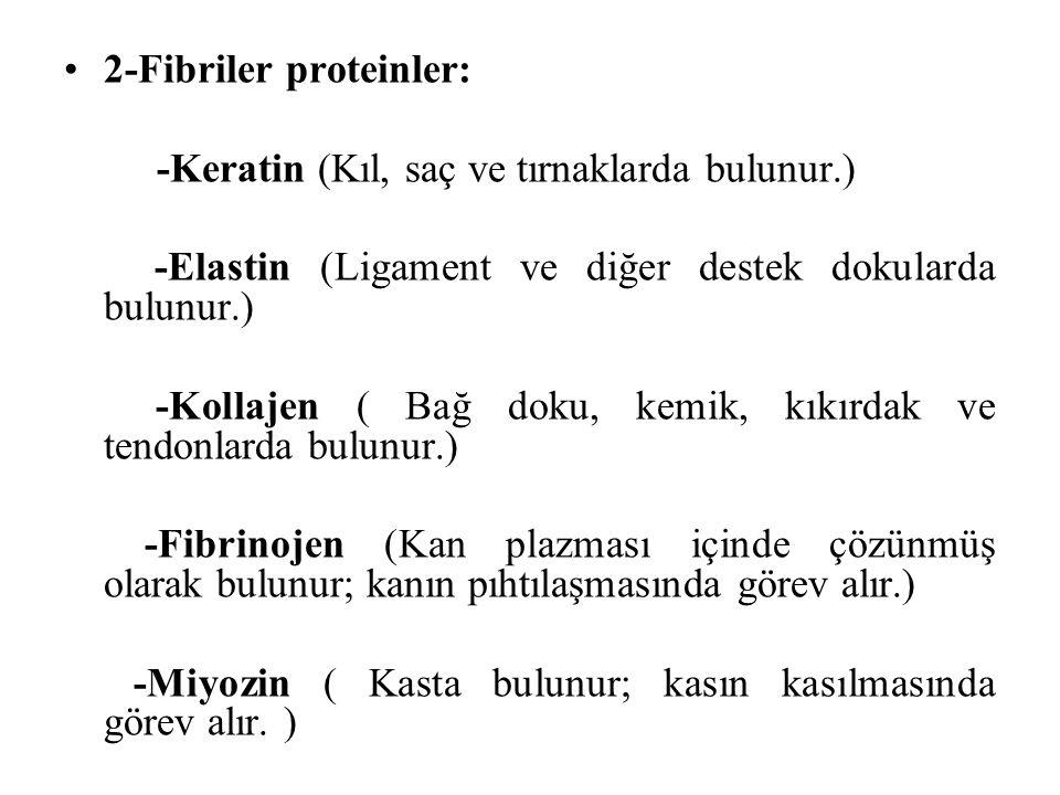 2-Fibriler proteinler: -Keratin (Kıl, saç ve tırnaklarda bulunur.) -Elastin (Ligament ve diğer destek dokularda bulunur.) -Kollajen ( Bağ doku, kemik,