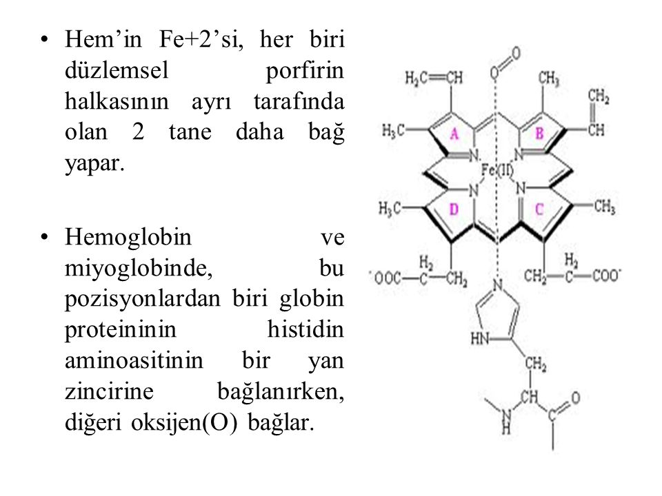 Hem'in Fe+2'si, her biri düzlemsel porfirin halkasının ayrı tarafında olan 2 tane daha bağ yapar. Hemoglobin ve miyoglobinde, bu pozisyonlardan biri g