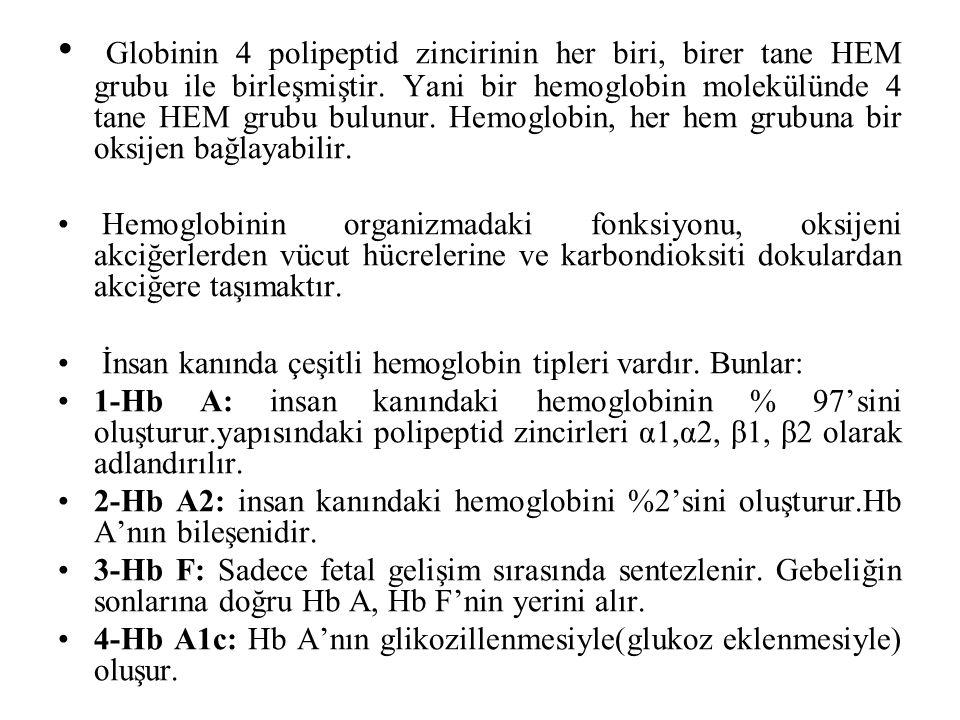 Globinin 4 polipeptid zincirinin her biri, birer tane HEM grubu ile birleşmiştir. Yani bir hemoglobin molekülünde 4 tane HEM grubu bulunur. Hemoglobin