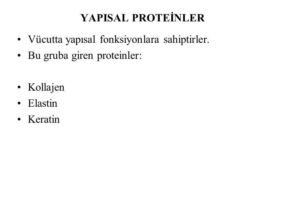 YAPISAL PROTEİNLER Vücutta yapısal fonksiyonlara sahiptirler. Bu gruba giren proteinler: Kollajen Elastin Keratin