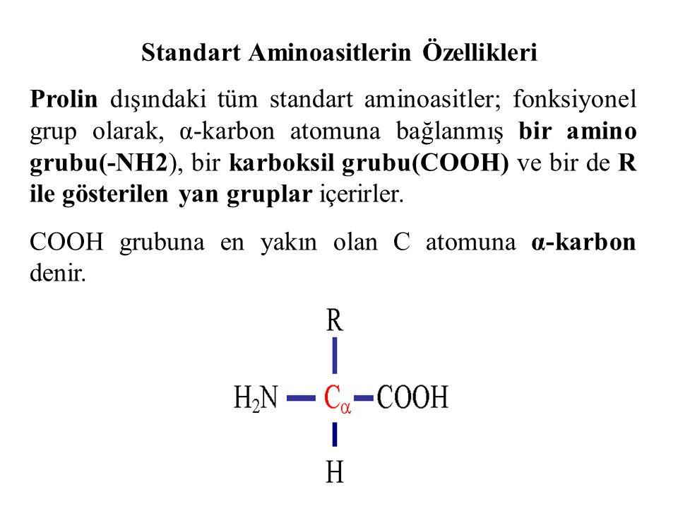 Standart Aminoasitlerin Özellikleri Prolin dışındaki tüm standart aminoasitler; fonksiyonel grup olarak, α-karbon atomuna bağlanmış bir amino grubu(-NH2), bir karboksil grubu(COOH) ve bir de R ile gösterilen yan gruplar içerirler.