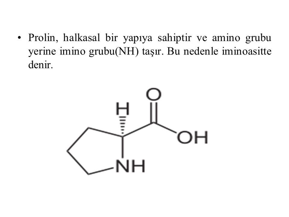 Prolin, halkasal bir yapıya sahiptir ve amino grubu yerine imino grubu(NH) taşır. Bu nedenle iminoasitte denir.