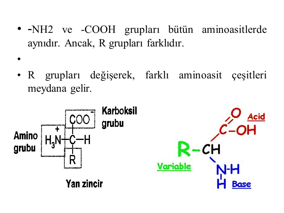 - NH2 ve -COOH grupları bütün aminoasitlerde aynıdır. Ancak, R grupları farklıdır. R grupları değişerek, farklı aminoasit çeşitleri meydana gelir.