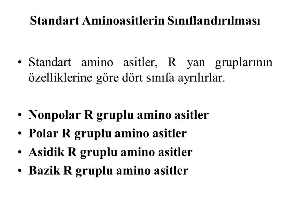 Standart Aminoasitlerin Sınıflandırılması Standart amino asitler, R yan gruplarının özelliklerine göre dört sınıfa ayrılırlar. Nonpolar R gruplu amino