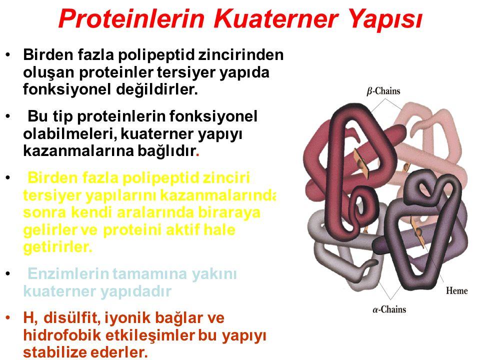 Proteinlerin Kuaterner Yapısı Birden fazla polipeptid zincirinden oluşan proteinler tersiyer yapıda fonksiyonel değildirler. Bu tip proteinlerin fonks