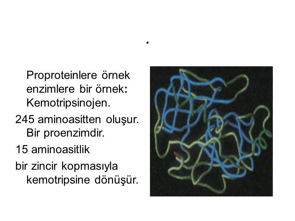 . Proproteinlere örnek enzimlere bir örnek: Kemotripsinojen. 245 aminoasitten oluşur. Bir proenzimdir. 15 aminoasitlik bir zincir kopmasıyla kemotrips