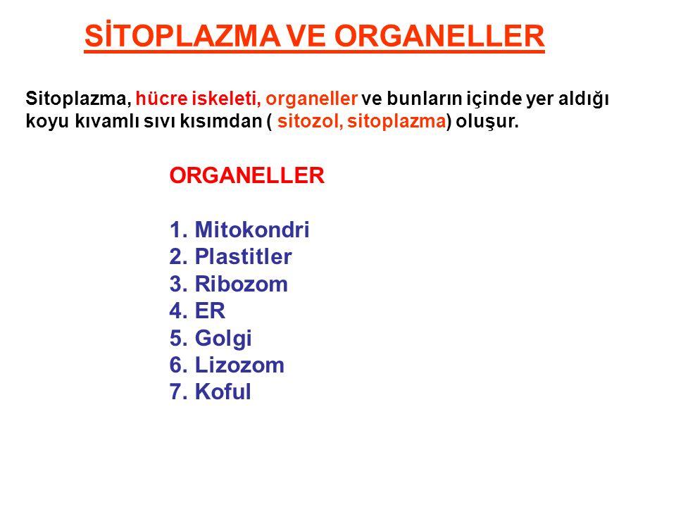 SİTOPLAZMA VE ORGANELLER Sitoplazma, hücre iskeleti, organeller ve bunların içinde yer aldığı koyu kıvamlı sıvı kısımdan ( sitozol, sitoplazma) oluşur.