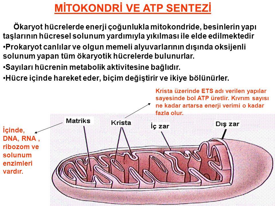 ProkaryotÖkaryot Çekirdek yokÇekirdek var.Sadece ribozom var.Zarlı ve zarsız organelleri var.